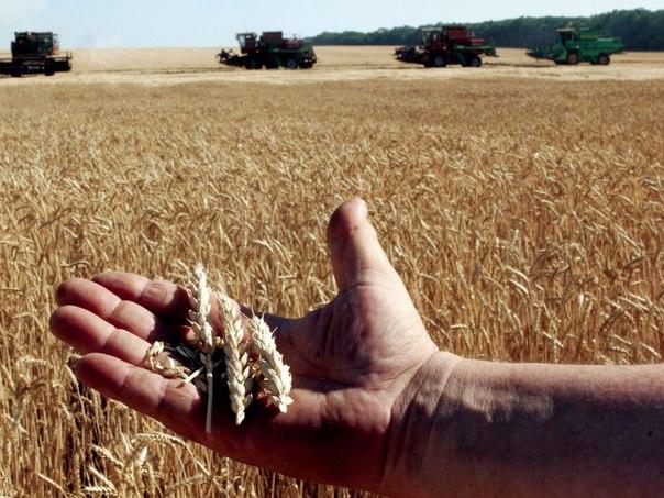 На поддержку элитного семеноводства Томская область направит 16 млн. рублей