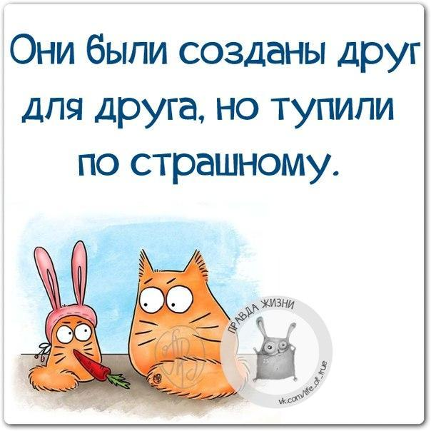 https://pp.vk.me/c543105/v543105123/16c6d/dBy1t-SiLNc.jpg