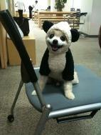 Кто сказал что я не панда??