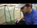 Что обязательно нужно знать при выращивание огурцов. Огурцы в открытом грунте