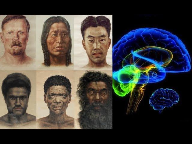 Разные расы - разный мозг!