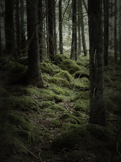 Теневой лес AeIWGUOPcDg