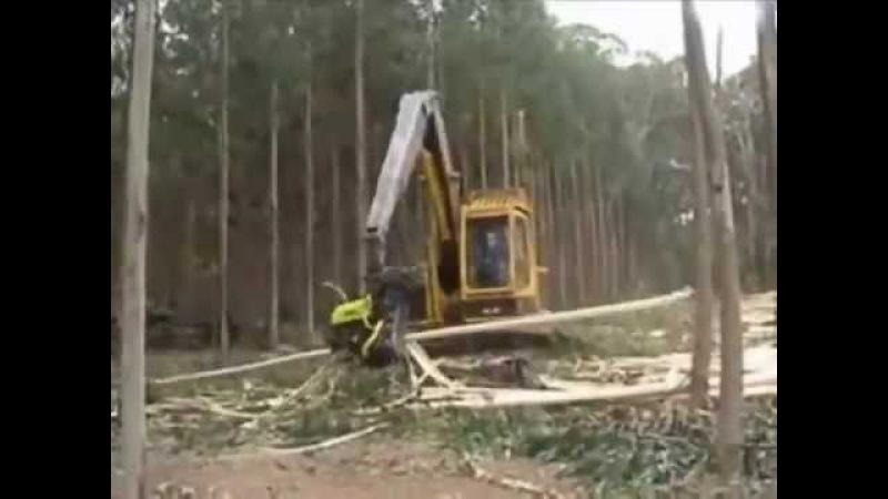 вырубка нашего леса чинайцами