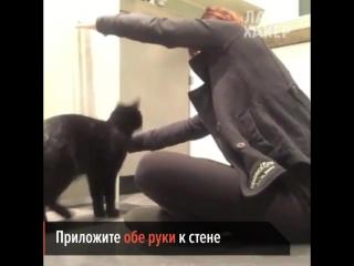 Простой способ научить кошку небольшому трюку