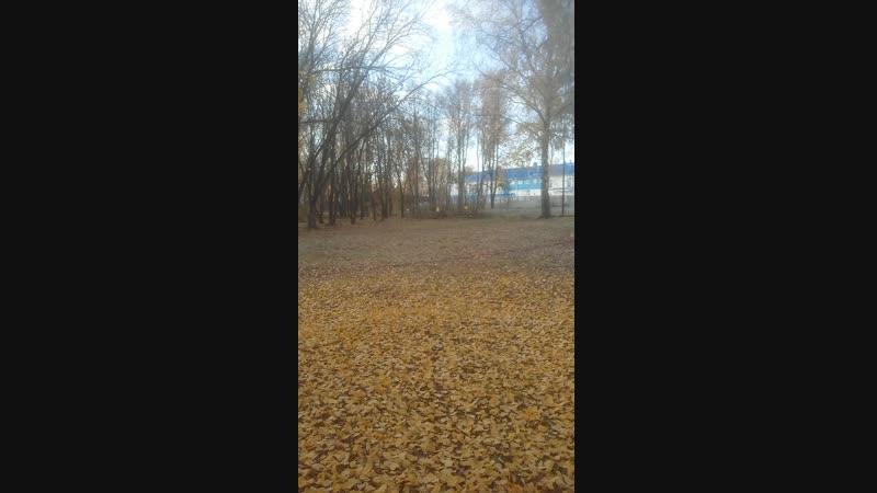 Денежный Вторник. Золотой Листопад с утра в парке.