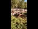 Хвостики на выгуле в выгульнике