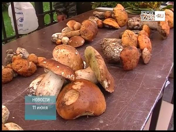 ТНТ-Поиск Начался сезон ягод и грибов