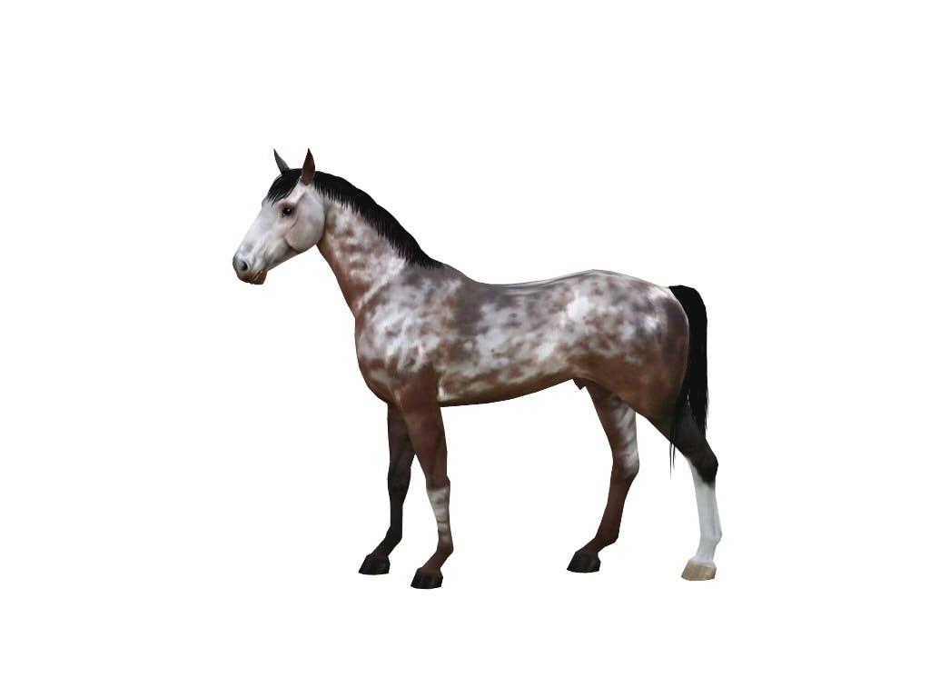 Регистрация лошадей в RHF 1.1 - Страница 2 KqhIJnku8us