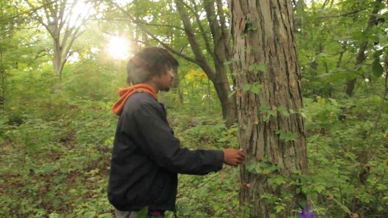 Harvesting Pignut Shagbark Hickory Nuts