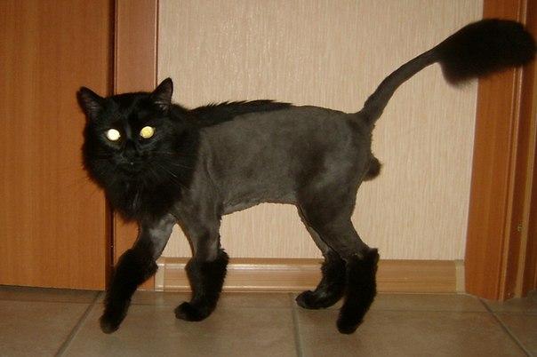 Модная стрижка собак и кошек