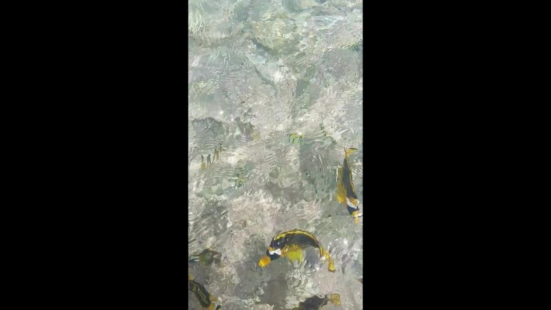 Єгипет золоті рибки