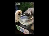 Не трогай МОИХ рыбок
