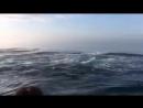 Группа туристов, наблюдавшая за китами у берегов Канады, обалдели, когда три горбатых кита решили устроить спонтанное представле