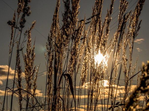 Сухая трава на обочине дороги освещенная закатным солнцем