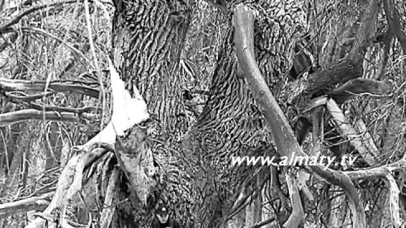 Түрлі түсті ағаштар
