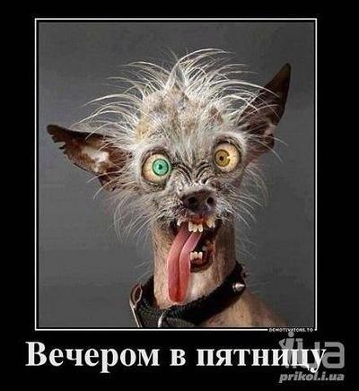 Анастасия Порошина, 31 декабря 1981, Москва, id60116109