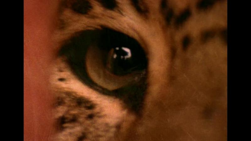 044 Enigma - The Eyes Of Truth ALEXnROCK