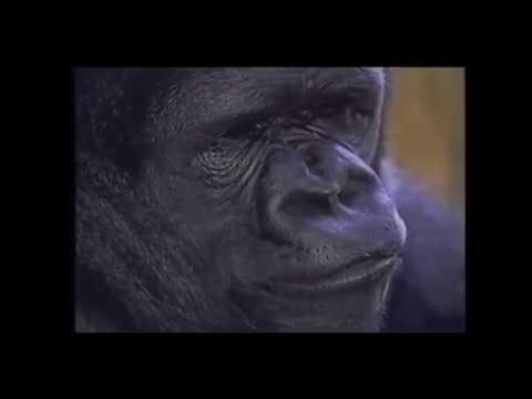 Rest in peace, sweet Koko.