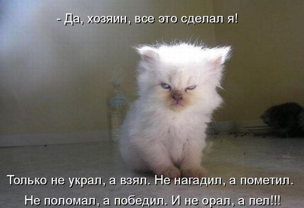 """ЮМОР ОТ""""ЕГО ЛИСЁНКА"""""""