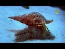 Царство кораллов / Coral Kingdoms