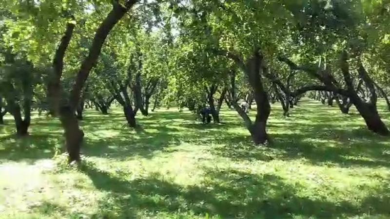Яблоневый Сад, Коломенское, Москва