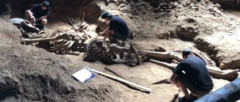 Уникальное открытие гигантского скелета в Таиланде - гиганта, возможно, убитого рогатой змеёй. JF8GgWsqH3c