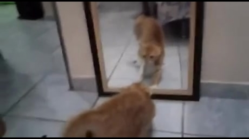 Кот который напугал себя до усрачки