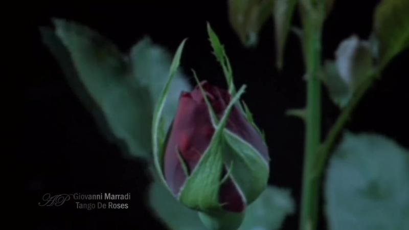 ✿❤✿ GIOVANNI MARRADI - Tango De Roses ✿❤✿
