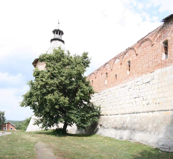 Красивое дерево, приятно было под ним посидеть. У башни сверху гнездо, оно намекает на название башни.