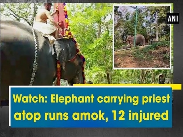 Watch Elephant carrying priest atop runs amok, 12 injured - Kerala News