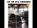 Это любовь)