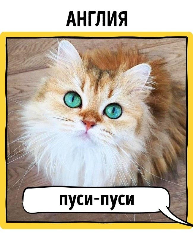 магазинов России у кого как зовут кота область Городской округ
