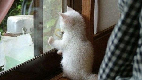 Когда я ухожу на работу, кошка провожает меня до двери. Когда я возвращаюсь с ра...