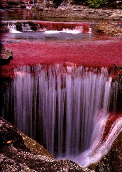 El río Kano Kristales, Colombia