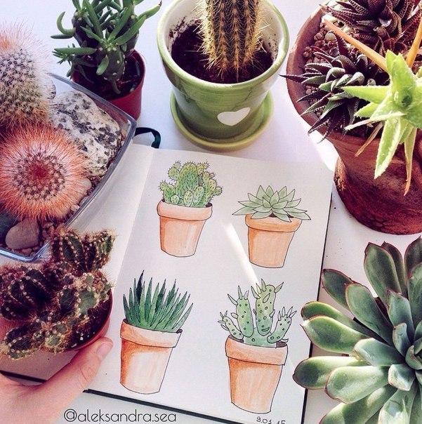 тумблер кактусы картинки