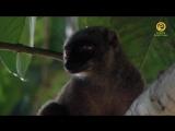 Захватывающие места Fascinating Places 2014 3. Захватывающий Мадагаскар - Леса северо-востока