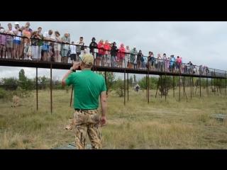 Олег Алексеевич среди львов отвечает на вопросы посетителей ! Тайган .Крым