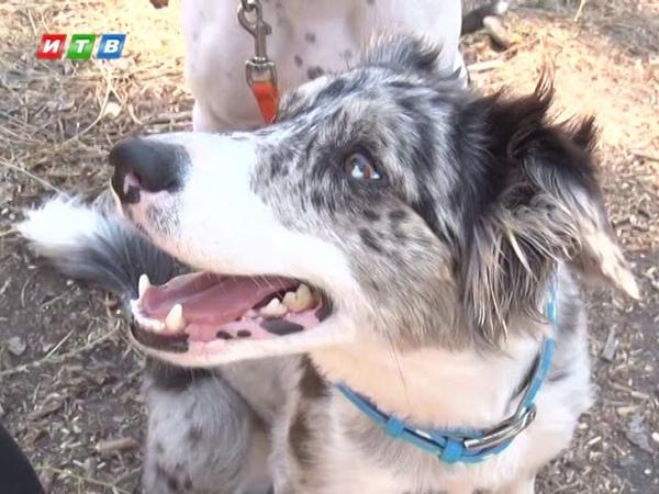 Обученные собаки спасателей добровольцев сдали экзамены