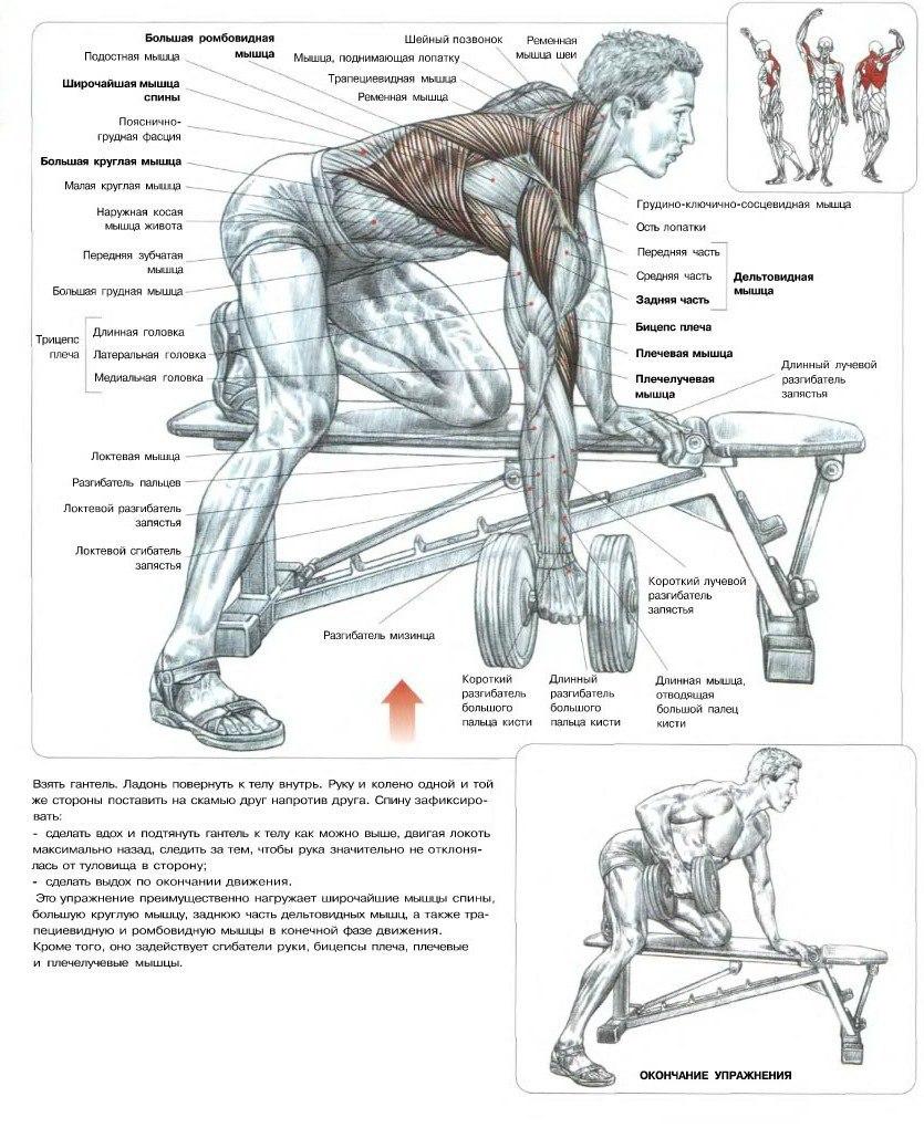 Как сделать свою спину шире