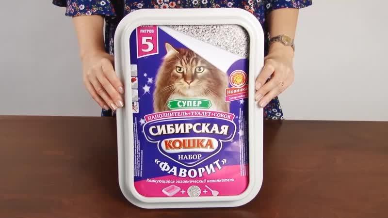 Сибирская кошка - Фаворит