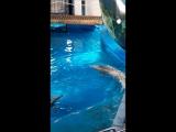 Дельфины в барселонском зоопарке