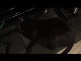 What's goin' on! (A black cat's craziness) O_0