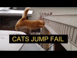 Cats Jump Fail Compilation - Funny Cats Compilation