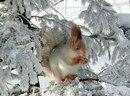 Фото Алены Стахановой №13