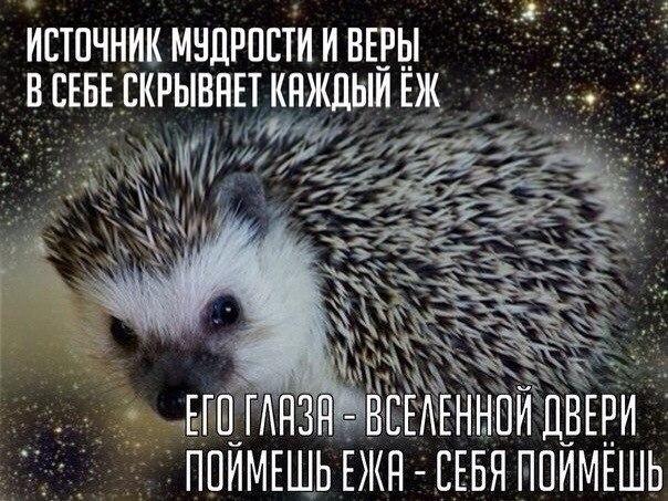https://pp.vk.me/c617827/v617827485/1520a/ld9rfncUrzg.jpg