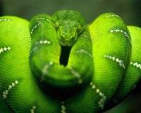"""Предпросмотр - Схема вышивки  """"Зелёная змея """" - Схемы автора  """"natbor """" - Вышивка крестом."""