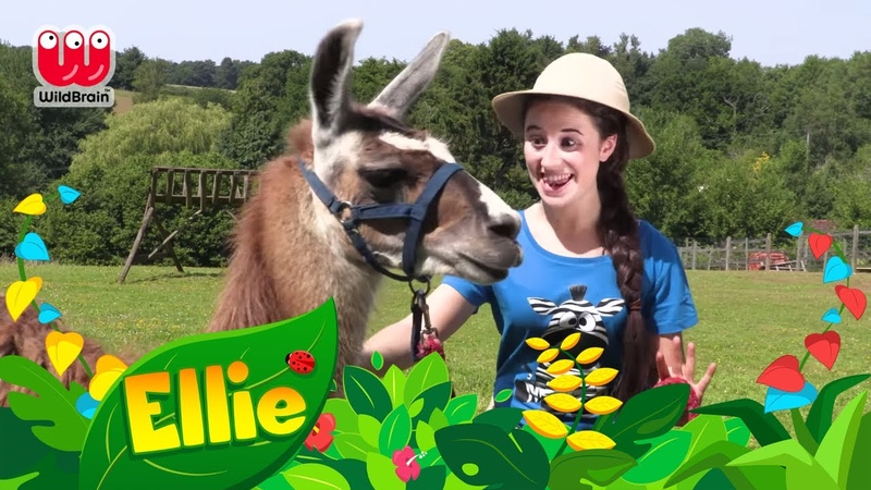 Learning for Kids | LLAMA SONG | ABC - Animals - Colors | Learning for kids - Ellie Explorer
