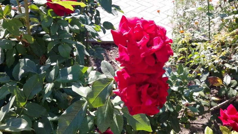 20180820_092756 Цветы в санатории