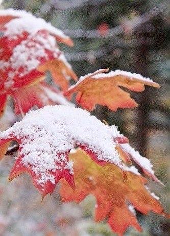 Зима - единственное время года, когда все могут проникнуть в сказку и верить в ч...