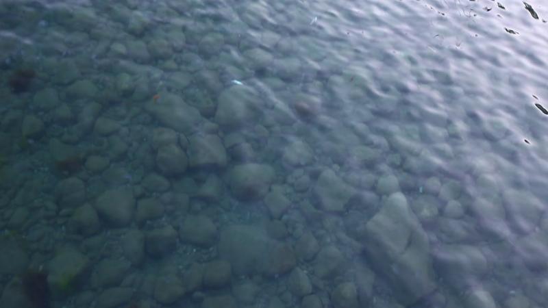 Косяк кефали на мелководье возле пристани 08.06.18